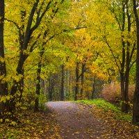Осень в пасмурный день 14 :: Виталий