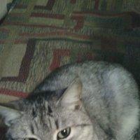 Умные глаза -  2 :: марина ковшова