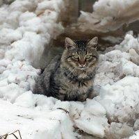****** :: Зоя Мишина