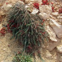 природа Кипра :: tgtyjdrf