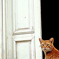 Черногорские кошки :: Елена Даньшина