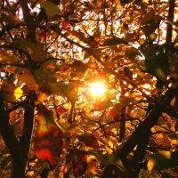 Осенний закат :: Оксана Н.