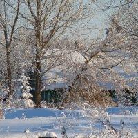 зимой :: linnud