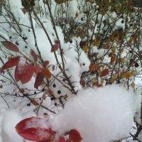 ...под снегом.. :: марина ковшова