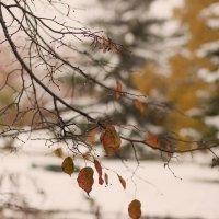 сенне-зимний пейзаж :: Ольга