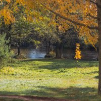 Осень золотая :: Виталий
