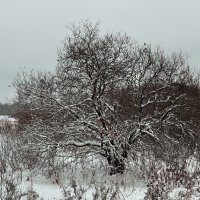 Одинокое дерево,зачем ты стоишь на ветру..... :: АЛЕКСАНДР СУВОРОВ