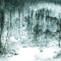 Снежный лес :: Роман Челазнов