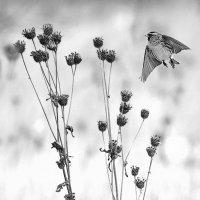 Зимний фотоэтюд с чечетками :: Екатерина Торганская