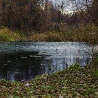в глубине леса... :: Алексей Бортновский