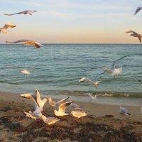 Осеннее море :: Эля Юрасова