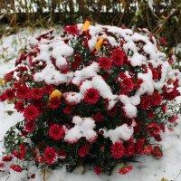 Цветы под снегом :: Наталья Д