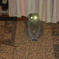 датчик движения с подсветкой :: владимир соловьёв
