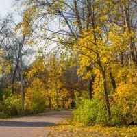 осень золотая 10 :: Виталий