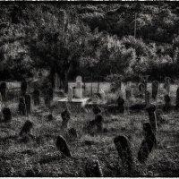 Старое кладбище :: Владимир Печенкин