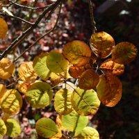 Осенние краски.... :: Лилия Дмитриева
