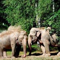 Слоны в Полоцке!!! :: Андрей Буховецкий