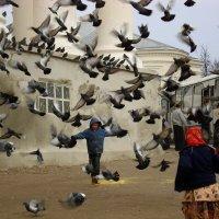 Летите голуби летите :: Андрей Головкин