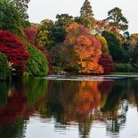 Осень :: Antonina Burton