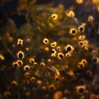 Солнечные зайчики :: catonbox