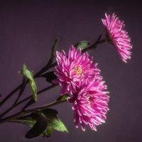 Хризантемы в павильоне. :: александр мак mak