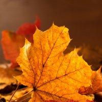 Осень :: scherbinator SHCHERBYNA