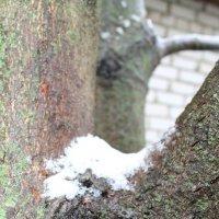 Первый снег :: Наталья Д
