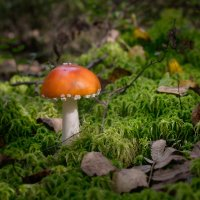 Про грибы в лесу :: Олег Пученков