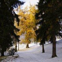 Первый снег. :: Vladimir