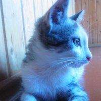 Котенок :: татьяна