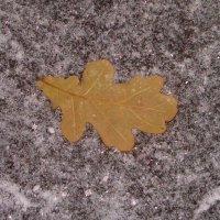Эта снежная осень... :: Галина Бобкина