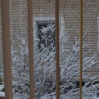 В ноябре-ноябре все деревья в серебре) :: Галина Бобкина