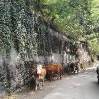 Абхазия :: наталия