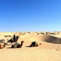 В пустыне. :: Чария Зоя