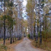 Сентябрь. Золотая осень. :: Мила Бовкун
