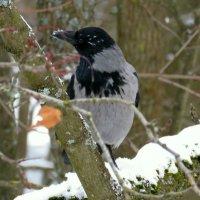 самая умная птица :: Валерия Яскович