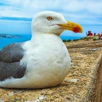 Чайка :: Vsevolod Boicenka