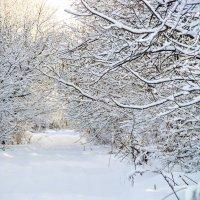 зимняя дорожка... :: Tatyana Belova