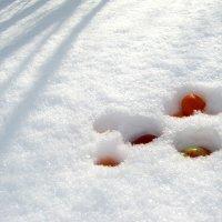 Яблоки на снегу )) :: Любовь Иванова