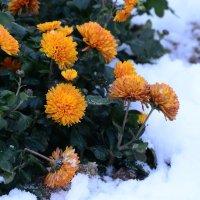 Зимние цветы. :: Paparazzi
