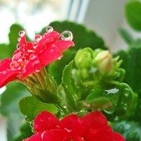 Приятное цветение :: Лидия (naum.lidiya)