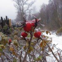 В ледяной глазури :: Николай Белавин