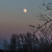 лунная ночь :: Надежда Щупленкова