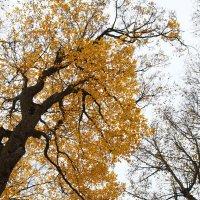 Осень :: MPS