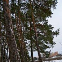 Извлекаем корни... :: Vladimir Semenchukov