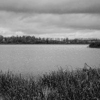 Блеск и простота природы :: Алеся Пушнякова