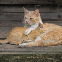 Хорошо, когда рядом мама..... :: Tatiana Markova