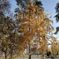 Осень золотая. :: Аnatoly Polyakov