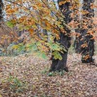 Осенью :: Владимир Самсонов