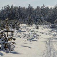 Околдован лес стоит, чудной жизнью он блестит :: Сергей Жуков